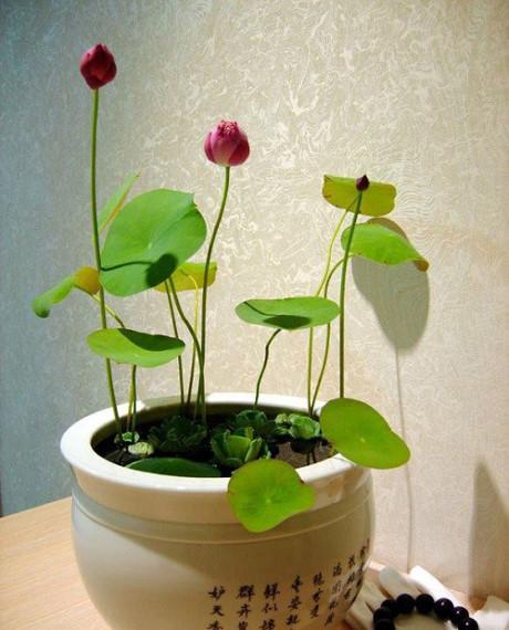 Выращиваем петунию из семян